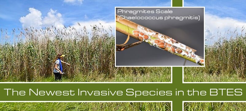 Image: Check out the Newest Invasive Species in the BTES